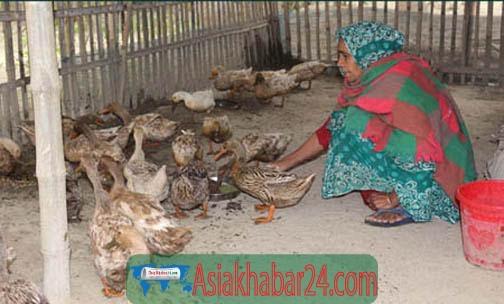 ঝিনাইদহে খুশি বেগমের হাঁস পালনে স্বচ্ছলতা