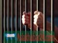 চাটখিলে মাদক ব্যবসায়ীর ২ বছরের কারাদন্ড