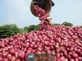 মিয়ানমারের পেঁয়াজ ৬০ টাকার বেশি দাম নয়