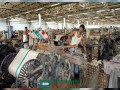 পাটকল শ্রমিকদের বকেয়া পরিশোধে ১৬৯ কোটি টাকা বরাদ্দ